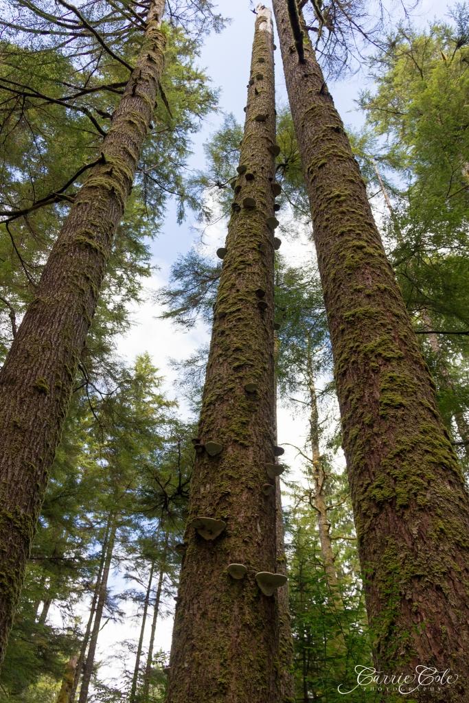Lichen resembles a staircase.