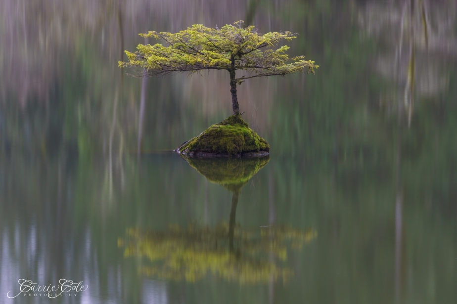 Fairy Lake Bonsai
