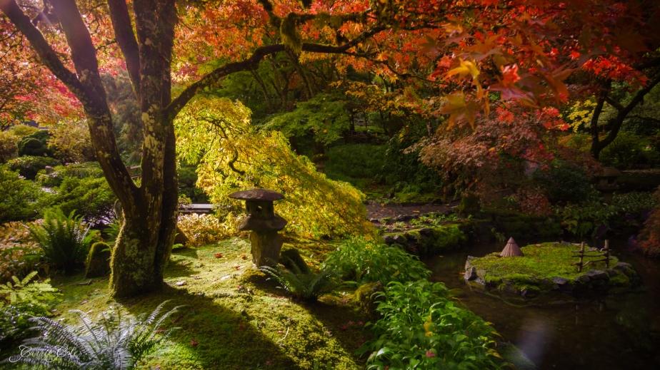 Japanese Garden Oasis